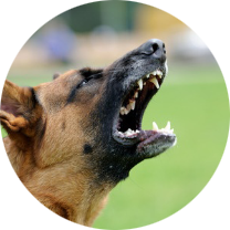 Colorado Dog Bite Injury Lawyer