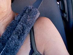 seatbelts