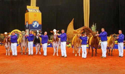 Award winning dairy cows at World Dairy Expo 2012