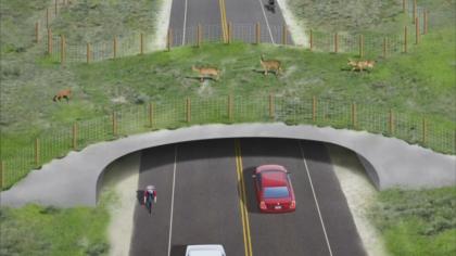 A wildlife overpass
