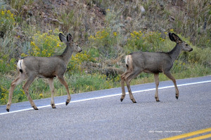 Deer-vehicle accidents are most common in autumn.