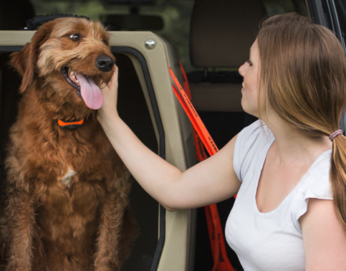 A recent survey found a large percentage of drivers were distracted when there was an unrestrained animal in the car.
